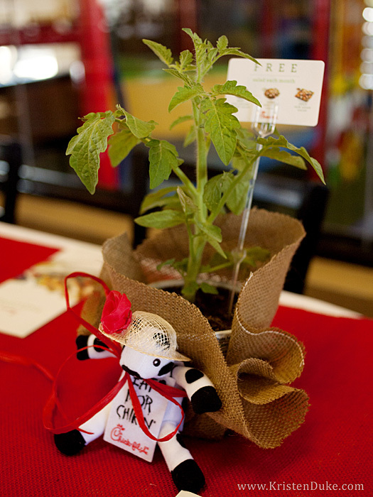 chick fil a cow with tomato plant