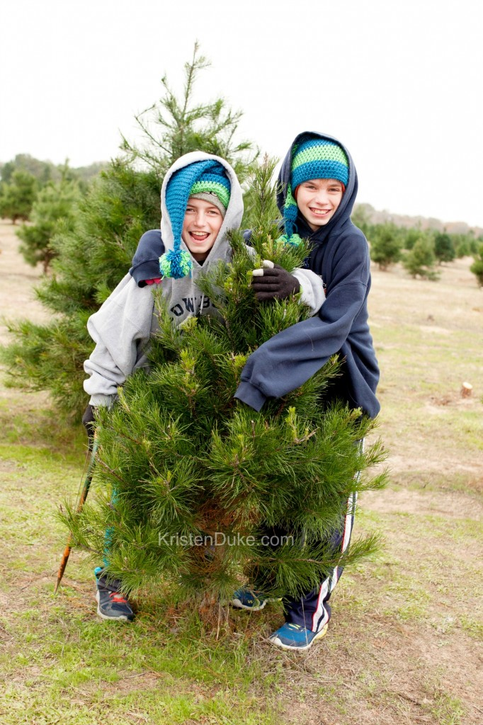 cutting down Christmas tree