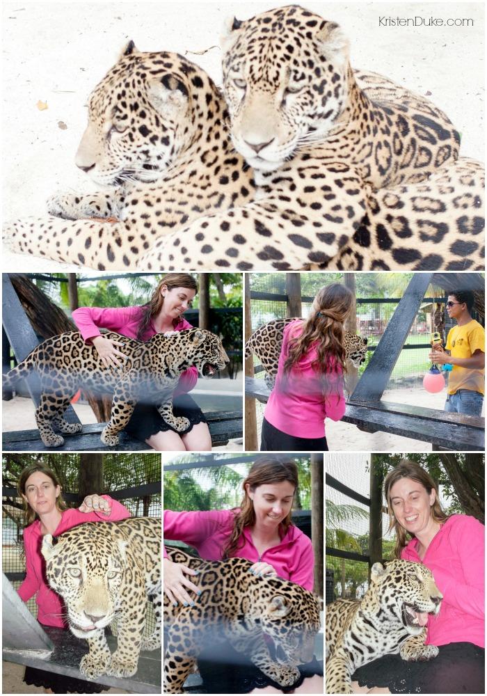 Play with Jaguar
