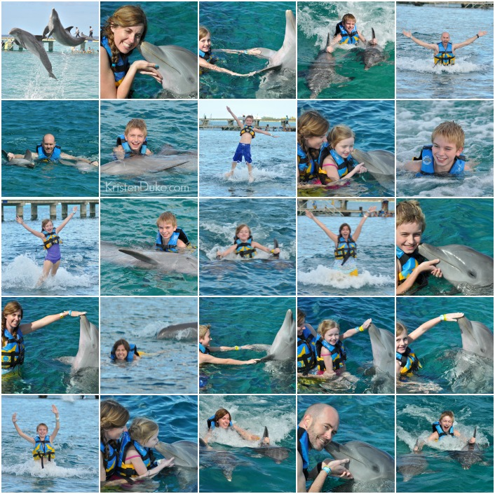 swimming with dolphins in cozumel