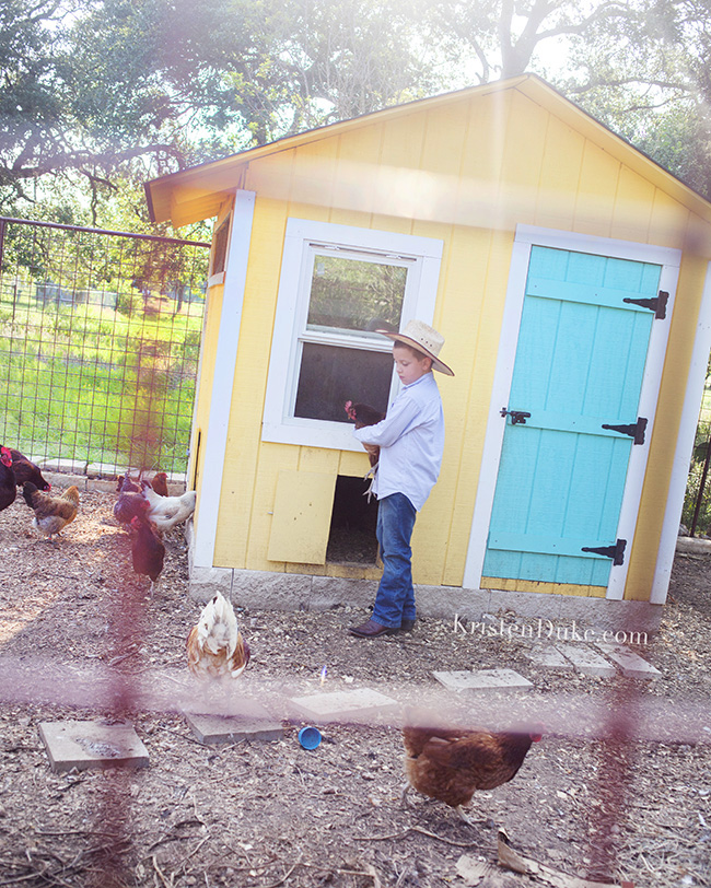 yellow chicken coop