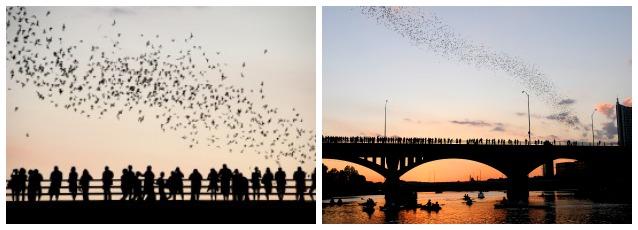 Austin Urban Bat Colony