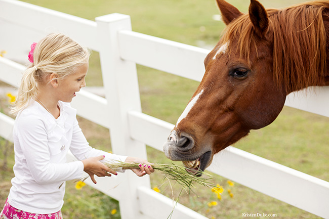 feeding horse picture