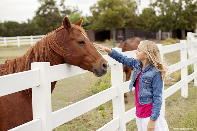 petting horse pictures