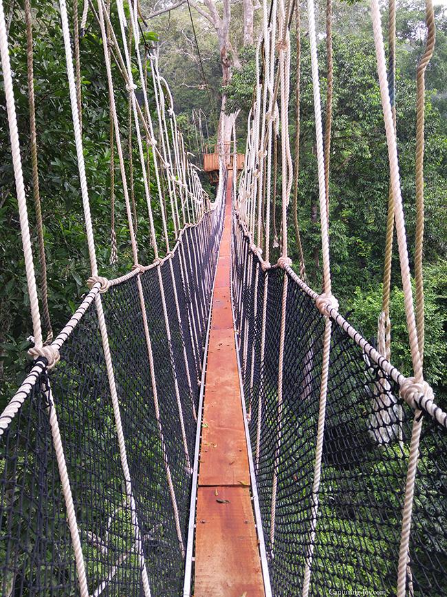 Bridge Canopy walk above trees in Ghana