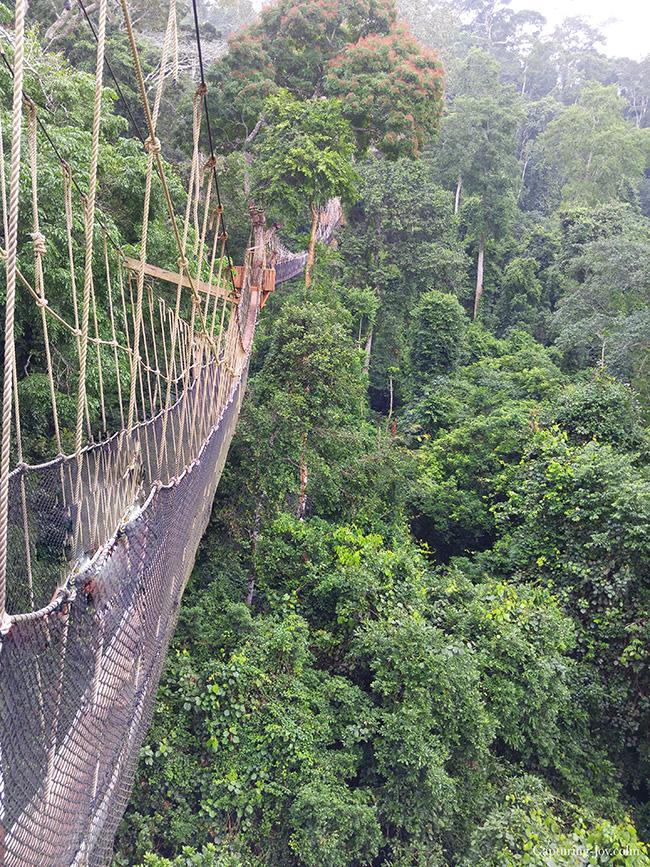 Ghana rope bridge