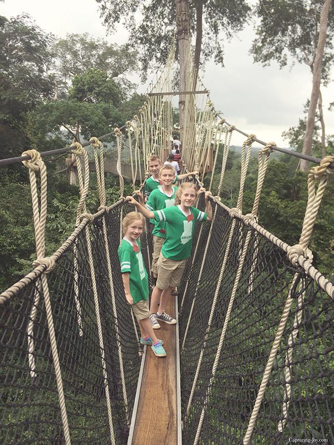 Kids on the canopy walk rope bridge