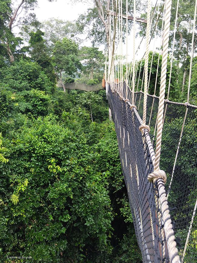 Rope bridge in Ghana
