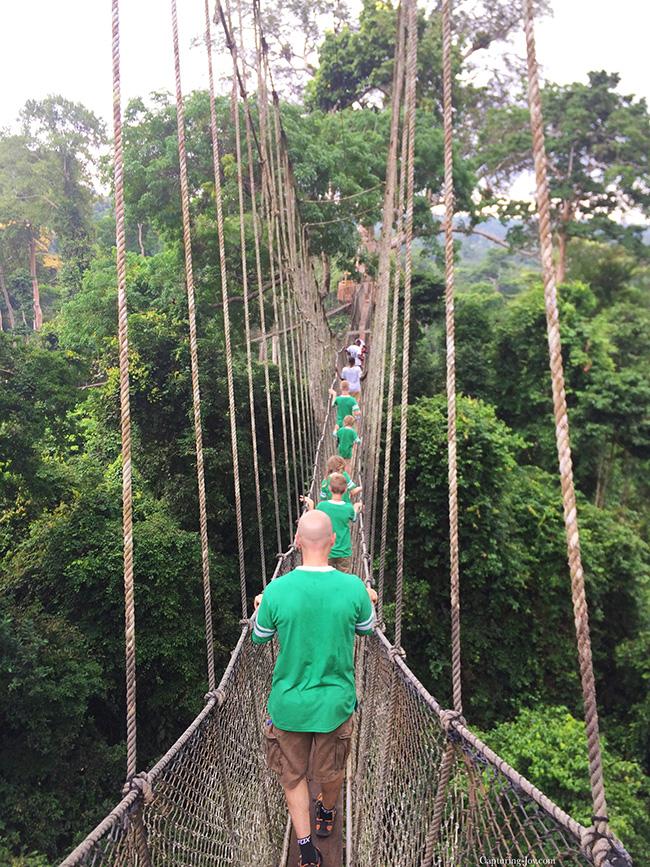 rope bridge canopy walk