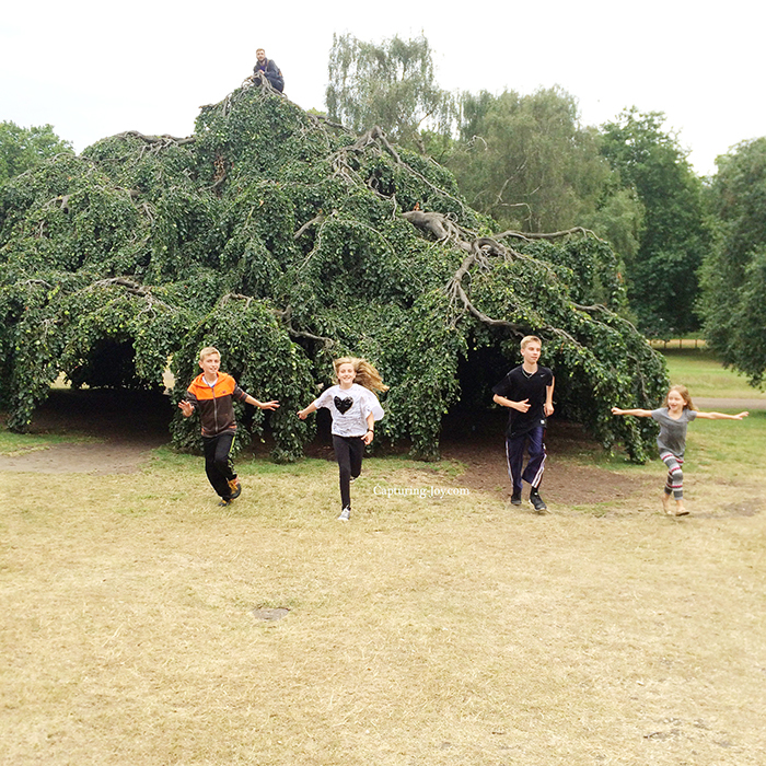 really cool tree in Hyde Park in London