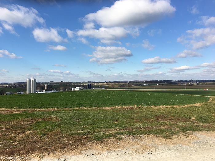 meadow lane dairy