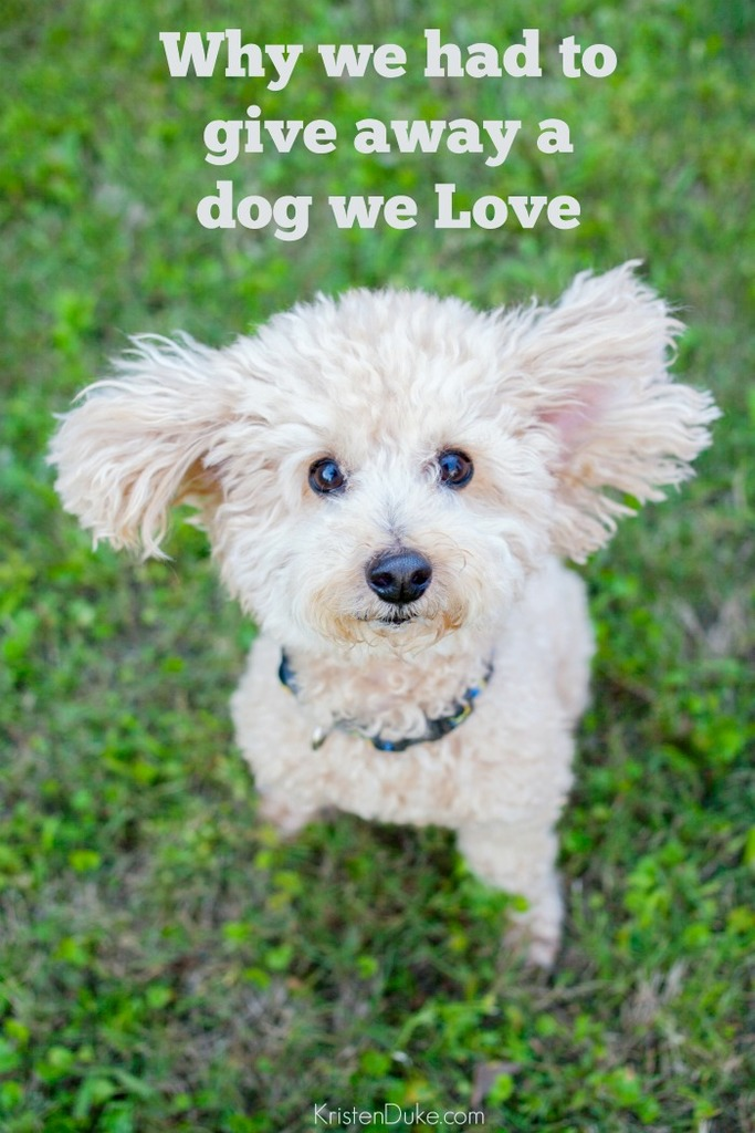 Why we Gave away a Dog we Love